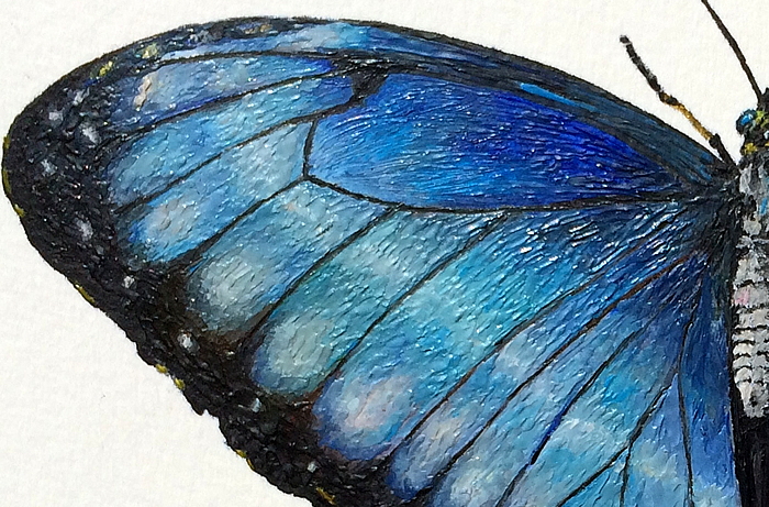 blue morpho (detail)