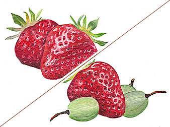 Strawberries series