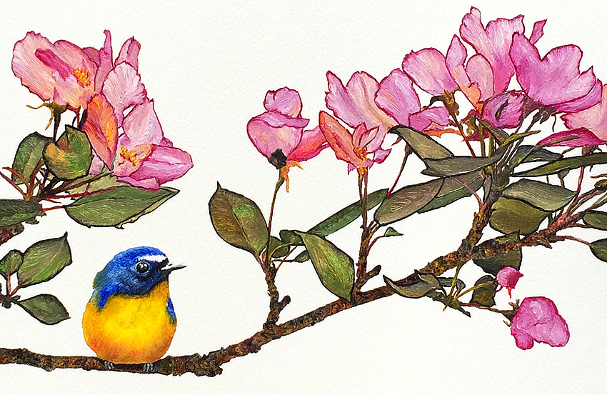 Bird, Bee, and Blossoms