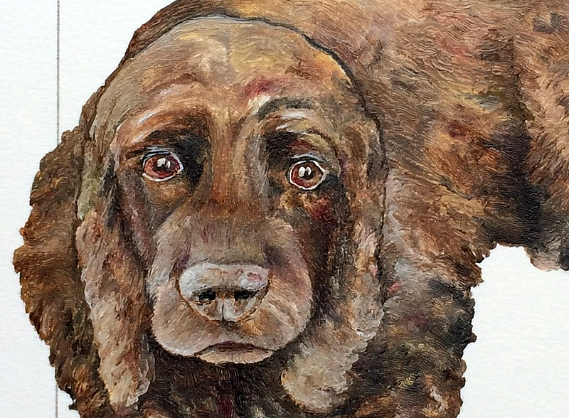 Cocker Spaniel detail