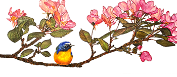 Bird, Bee, and Blossoms - business card
