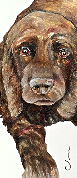 Cocker Spaniel - business card