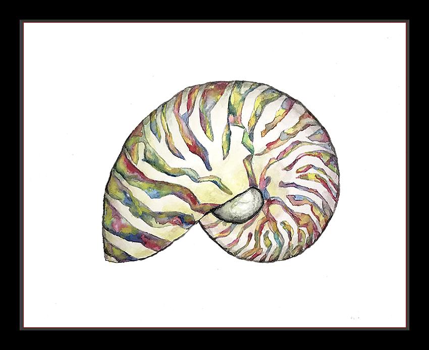 Iridescent Nautilus framed