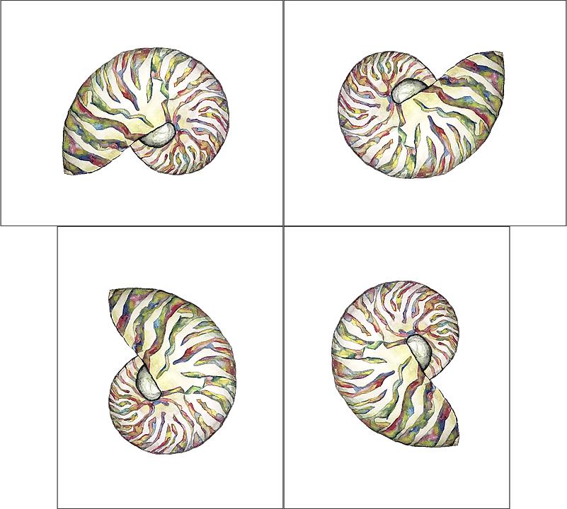 Iridescent Nautilus 4 orientations