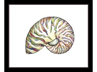 Iridescent Nautilus