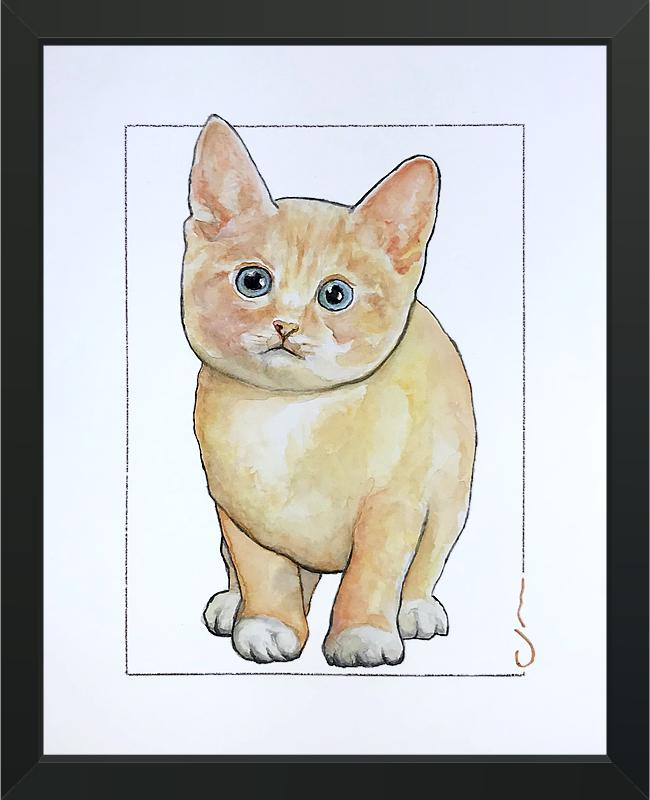 6 Cat